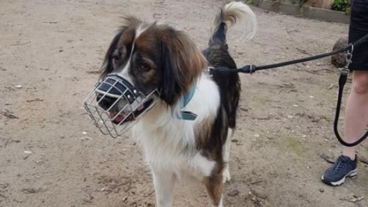 Hund Bajat aus dem Tierheim Salzgitter hat viel durchmachen müssen. Nun bekommt er endlich seine Chance.
