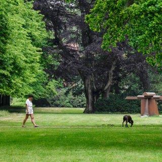 In Braunschweig ist ein Hund im Prinzenpark von einem Ast erschlagen worden. (Symbolbild)