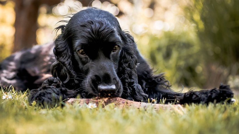Hund Sucht Zuhause