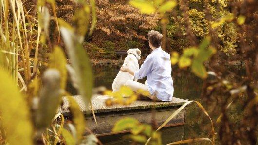 In Wolfenbüttel trauert ein Mann um seinen geliebten Hund. Der Vierbeiner wurde nur drei Jahre alt... (Symbolbild)