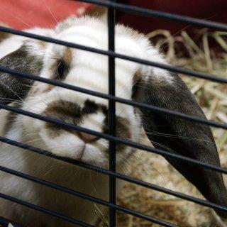 In Gifhorn wurde ein Kaninchen in einem schlimmen Zustand gefunden. (Symbolfoto)