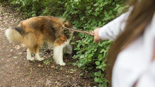 In Braunschweig ist eine Frau bei einer Gassirunde mit ihrem Hund angegriffen worden. Dabei hatte sie nur ihre Tochter beschützen wollen... (Symbolbild)