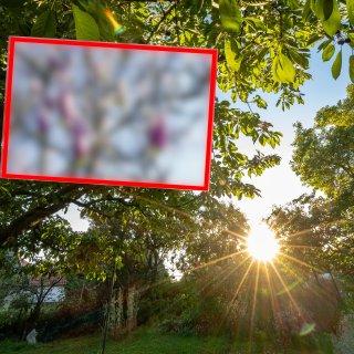 Braunschweiger können gerade ein besonderes Naturschauspiel beobachten.