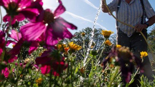Mit einem neuen Projekt möchte die Stadt Braunschweig für mehr Grün sorgen. (Symbolbild)