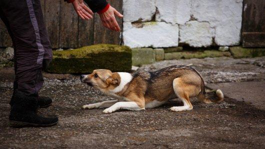 Hund: Anhand dieser Verhaltensweisen kannst du erkennen, ob dein Vierbeiner dich nicht mag. (Symbolbild)