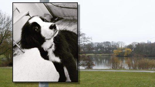 """Hund """"Monti"""" wurde nicht wie zuerst vom Besitzer behauptet, am Schillerteich totgetreten."""