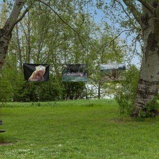 Salzgittersee: Letzte Woche wurde die Parkside Gallery beschädigt - Werke mussten abgenommen werden.
