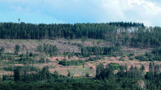Hat der Harz wieder mit seinem Erzfeind dem Borkenkäfer zu kämpfen? (Symbolbild)