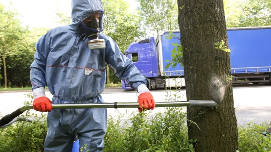 Noch kann das Gesundheitsamt den Eichenprozessionsspinner chemisch bekämpfen. Ab Juni muss abgesaugt werden (Archivbild).