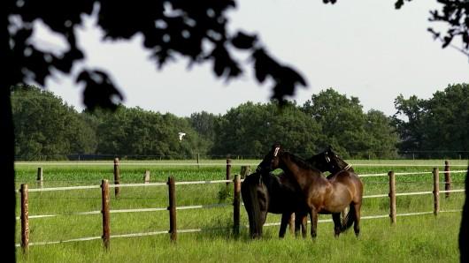 Die Pferde blieben zum Glück auf ihrer Weide in Wittingen (Symbolbild).