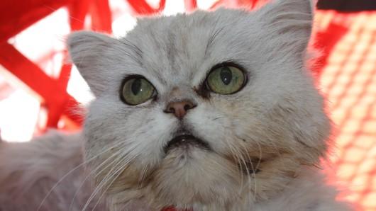 Pascha wartet im Tierschutzzentrum auf ein neues Zuhause.