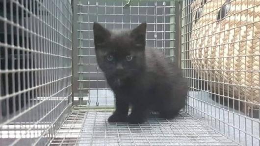 Dieses kleine Kätzchen wurde wahrscheinlich ausgesetzt. Nur dank aufmerksamer Autofahrer hat es überlebt.