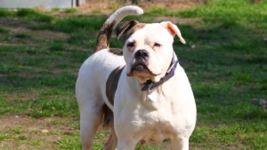 Dieser Hund sucht in Gifhorn oder Umgebung ein neues Zuhause. Dabei benötigt ihr menschlicher Begleiter allerdings einige entscheidende Eigenschaften.