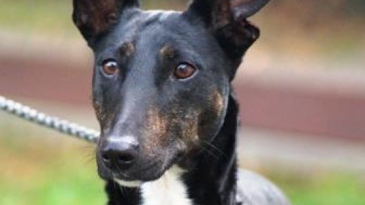 Hund Charlie sucht eine neue Familie.