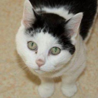 Katze Gundi sucht eine neue Familie.