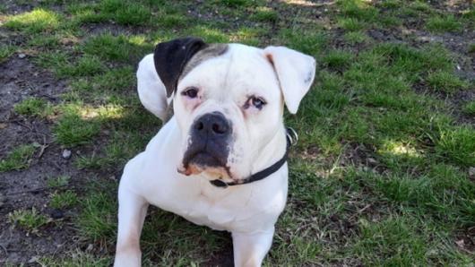 Hund Lexi wartet im Tierheim Gifhorn auf neue, liebevolle Besitzer