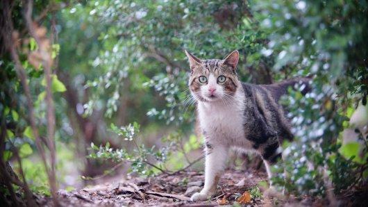 Grausam! Ein Unbekannter hat auf eine Freigänger-Katze im Kreis Gifhorn geschossen. (Symbolbild)