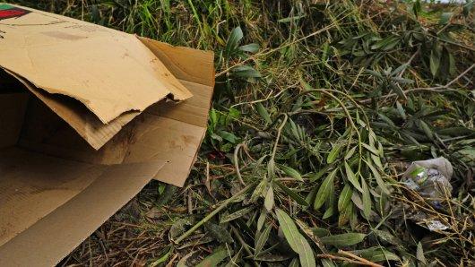 Eine Spaziergängerin hat im Kreis Gifhorn einen auffälligen Karton in einem Busch entdeckt. Ihr Gefühl sollte ihr Recht geben...