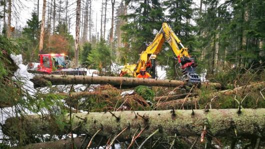 Waldarbeiter bergen nach Orkantief Friederike im Nationalpark Harz im Bereich Torfhaus umgefallen Bäume.