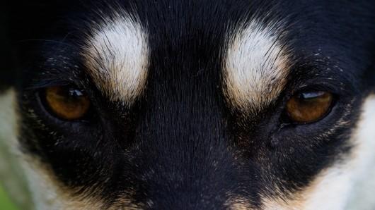 Wie es dem Hund geht, ist nicht bekannt. (Symbolbild)