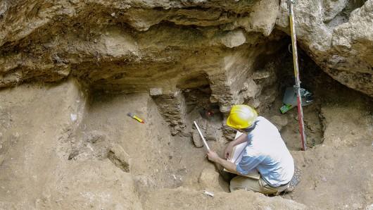 Tausende von Knochenfunden bilden ein einmaliges Archiv der eiszeitlichen Tierwelt und liefern zusammen mit Resten von Kleintieren wichtige Einblicke in das Klima seit der letzten Kaltzeit.