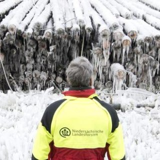 Mehrere tausend Baumstämme liegen von einer dicken Eisschicht überzogen an einem Lagerplatz der Niedersächsischen Landesforsten im Harz. Das Winterwetter und die künstliche Beregnung des Holzes hat nun alles in eine Eis-Landschaft verwandelt.