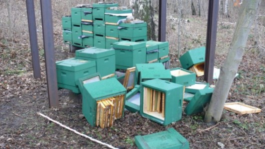 Unbekannte haben in Wernigerode acht Bienenvölker ausgelöscht.