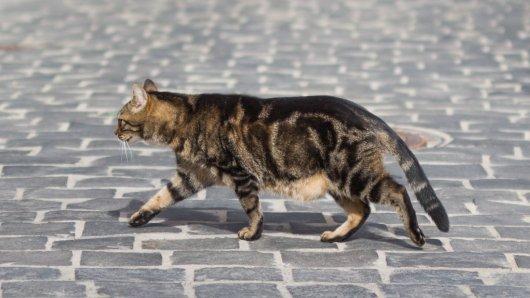 Die Katze war immer in den Straßen unterwegs (Symbolbild).