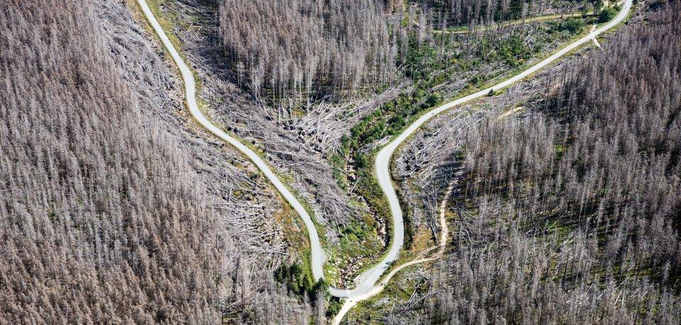 Borkenkäfer, Stürme und Trockenheit sorgen für ein massives Bäumesterben im Harz.