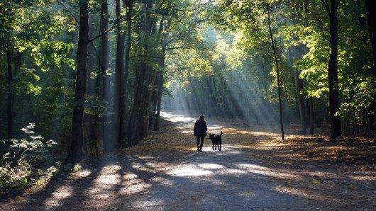 Eine Frau war im Christianental im Harz spazieren. Dann hat sie eine widerliche Beobachtung gemacht. (Symbolbild)