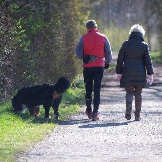 Wer zurzeit mit seinem Hund im Harz spazieren geht, sollte aufpassen. (Symbolbild)