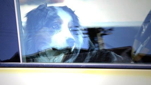 Ein Tierhalter hat seinen Hund einfach im Hitze-Auto im Harz zurückgelassen – weil er einkaufen gehen wollte. (Symbolbild)