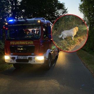 Die Feuerwehr musste anrücken und den Hund aus seiner misslichen Lage zu retten.