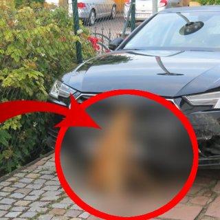 Die Audifahrerin fuhr noch weitere Kilometer durch den Harz, bevor sie merkte was sich in ihrem Kühlergrill befand.