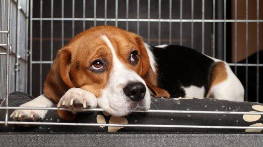Hund Bijou aus dem Harz verschwindet spurlos. Dann beginnt eine unglaubliche Geschichte.
