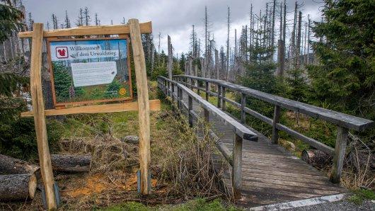 Ein Experte zeichnet eine düstere Prognose für den Harz, sollte das Borkenkäfer-Problem nicht in den Griff zu kriegen sein.