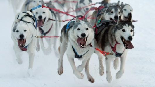 Ein Hundegespann fährt durch die verschneite Winterlandschaft. (Archivbild)