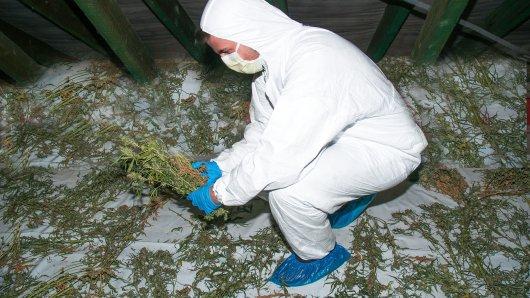 Die Polizei hat in Helmstedt eine Cannabisplantage abgeerntet.