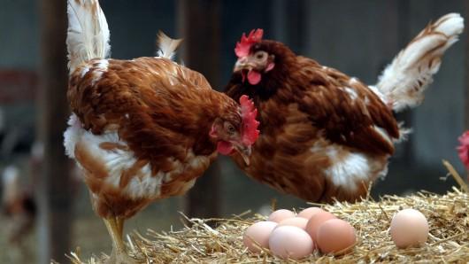 Der Kleine war laut Polizei Celle total faszniert von den Hühnern (Symbolbild).
