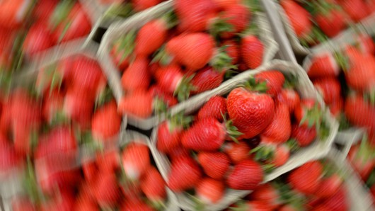 Die Süßen Früchte müssen jetzt schnell geerntet werden (Symbolbild).
