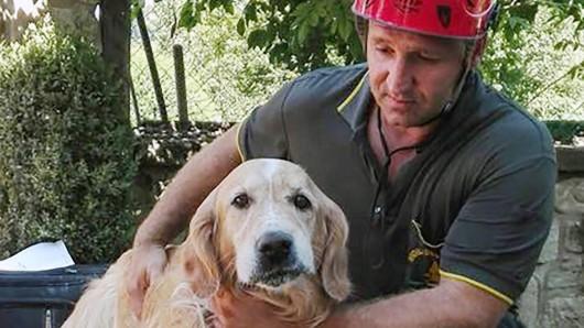 Der Golden Retriever Romeo hat zehn Tage unter den Trümmern eines Hauses in Amatrice überlebt.