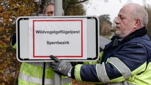 In Schleswig-Holstein ist besonders die Region um die Stadt Plön betroffen. Mitarbeiter der Stadtwerke bringen ein Schild mit dem Hinweis auf den eingerichteten Sperrbezirk an.