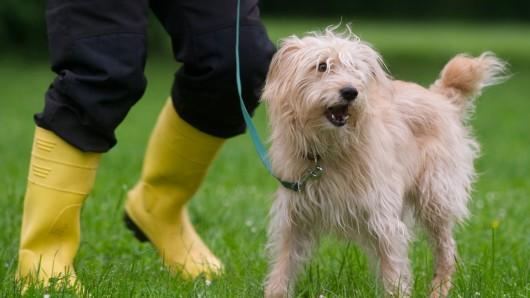 Die Brut- und Setzzeit geht wieder los. Das bedeutet, dass Hunde an die Leine müssen. (Symbolbild)