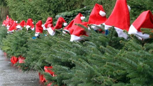 Die Stadt Schöningen ist auf der Suche nach Weihnachtsbäumen. (Archivbild)