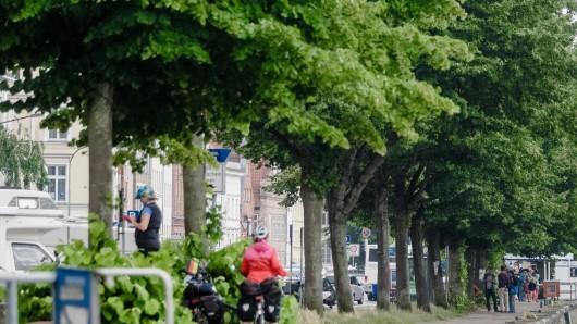 Sieben Linden sollen in Lebenstedt gefällt werden. (Symbolbild)