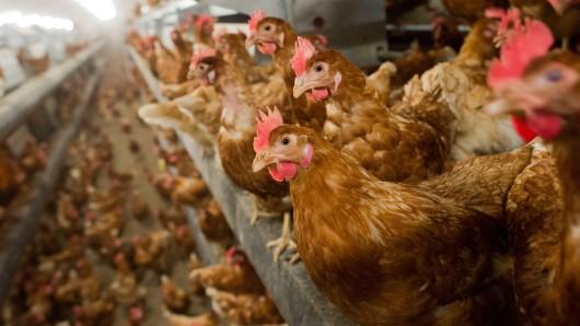 Allein in Niedersachsen wurden 27 Geflügelbetriebe geschlossen. (Archivbild)