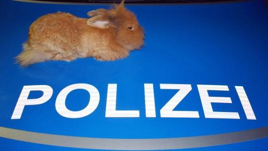 Ein Kaninchen hat in Celle für einen ungewöhnlichen Polizeieinsatz gesorgt (Symbolbild).