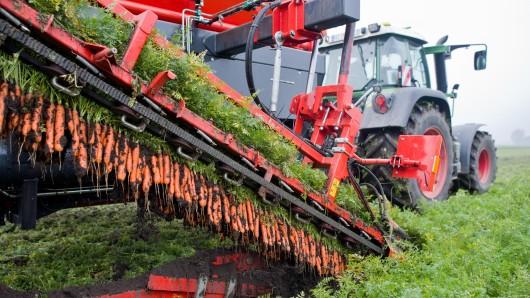 Ein Landwirt der BioBoerdeLand Gbr erntet Bio-Möhren auf einem Feld bei Algermissen.