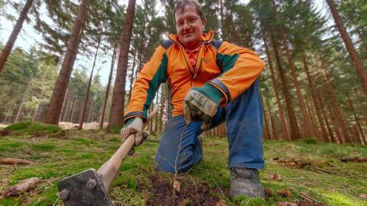 Ein Forstwirt beim Pflanzen von Bäumen (Symbolbild).