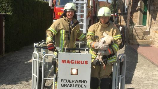 Die Feuerwehr hat den Storch wohlbehalten befreit.